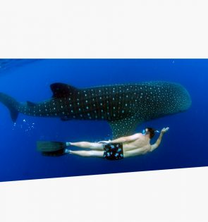 mayan tours whaleshark