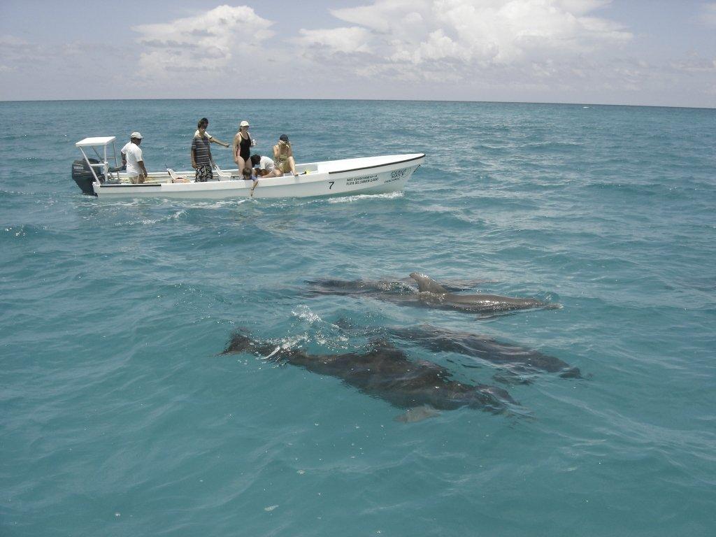 Dolphins in Sian Ka'an