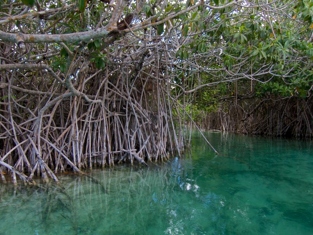 Sian Ka'an Mangrove swamp